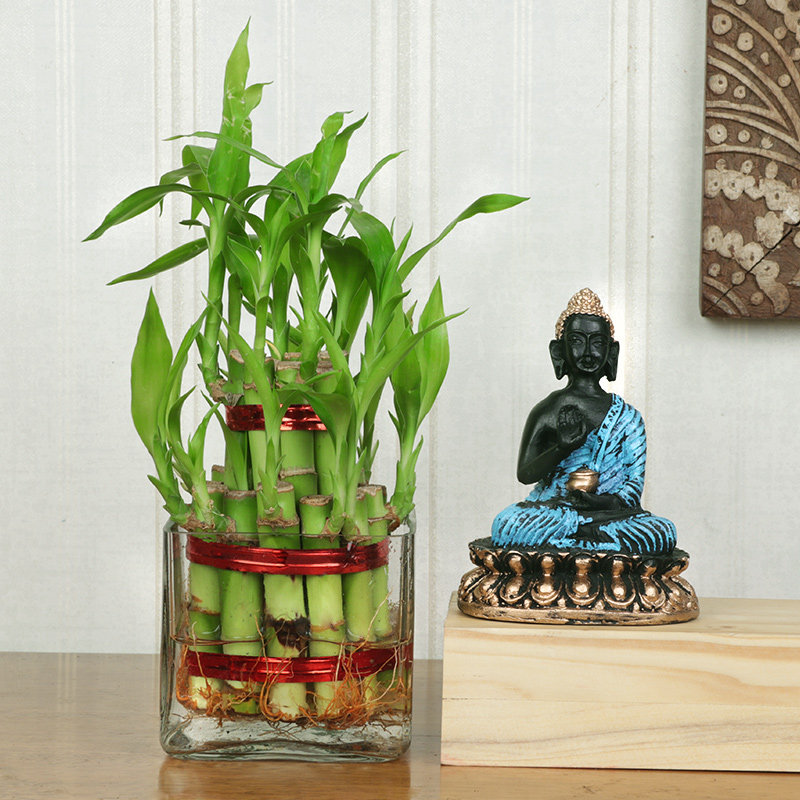 2 Layer Bamboo