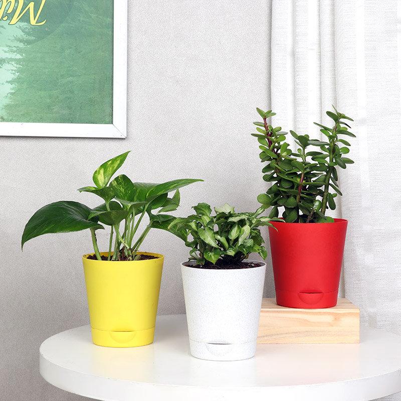 3 Plant Combo