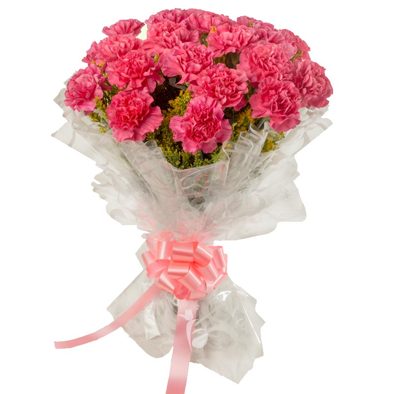 20 Pink Carnations with Close View