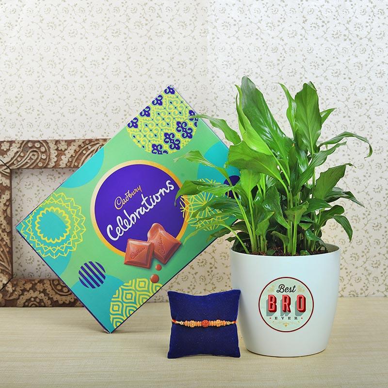 Nok Jhok Rakhi Plant Chocolate Combo