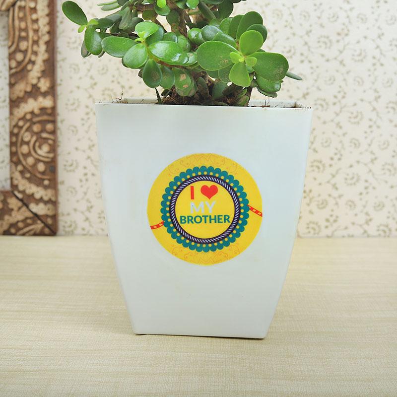 2nd Product in Rudraksha Rakhi With Five Dairy Milk Chocolates N Jade Plant