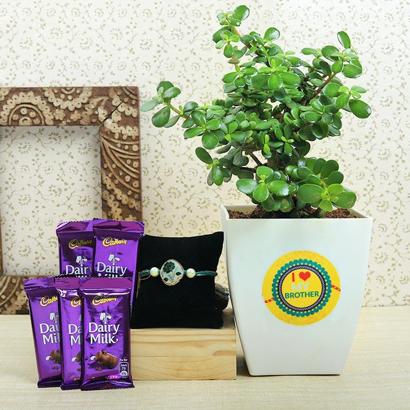 Rudraksha Rakhi With Five Dairy Milk Chocolates N Jade Plant