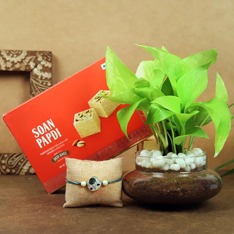 Money Plant With Rakhi N Soan Papdi