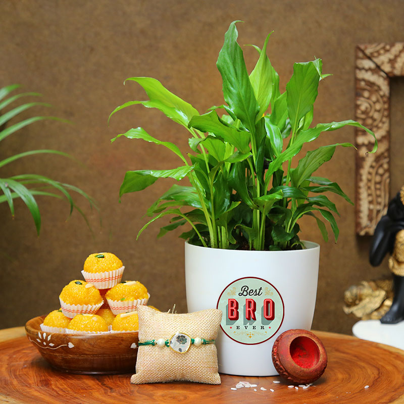 Rudraksha Rakhi With Peace Lily Plant N Motichoor Ladoo