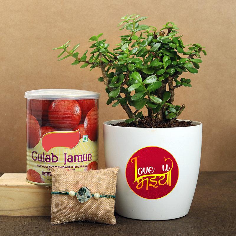 Rudraksha Rakhi With Gulab Jamun N Jade Plant