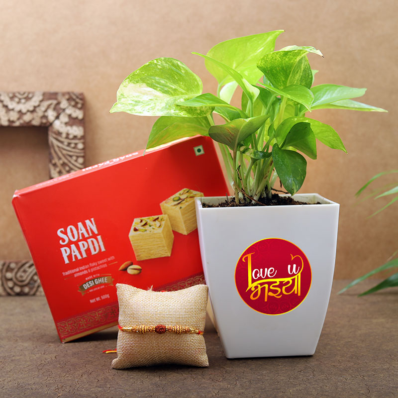 Love U Bhaiya Money Plant With Rakhi N Soan Papdi