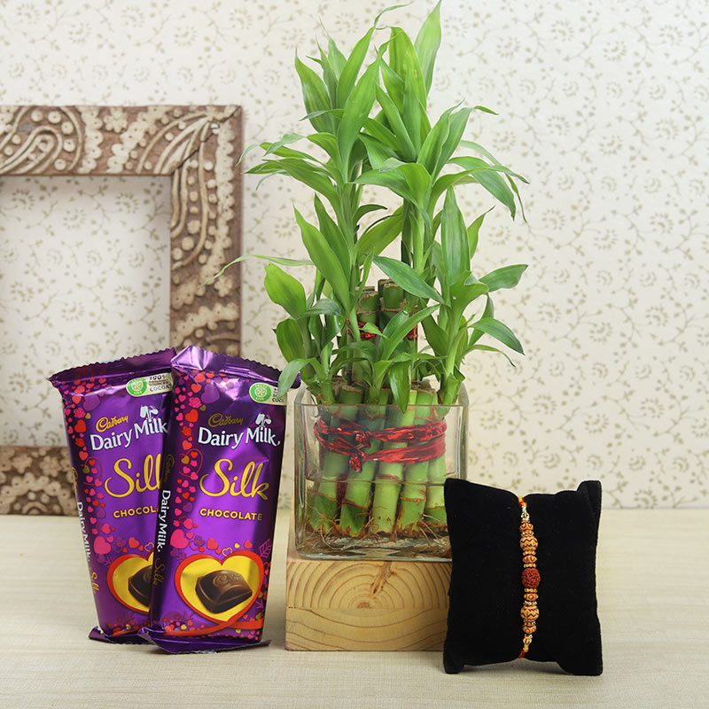 Pyara Bhai Choco Bamboo Plant