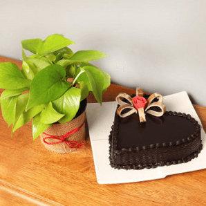 Cake combos