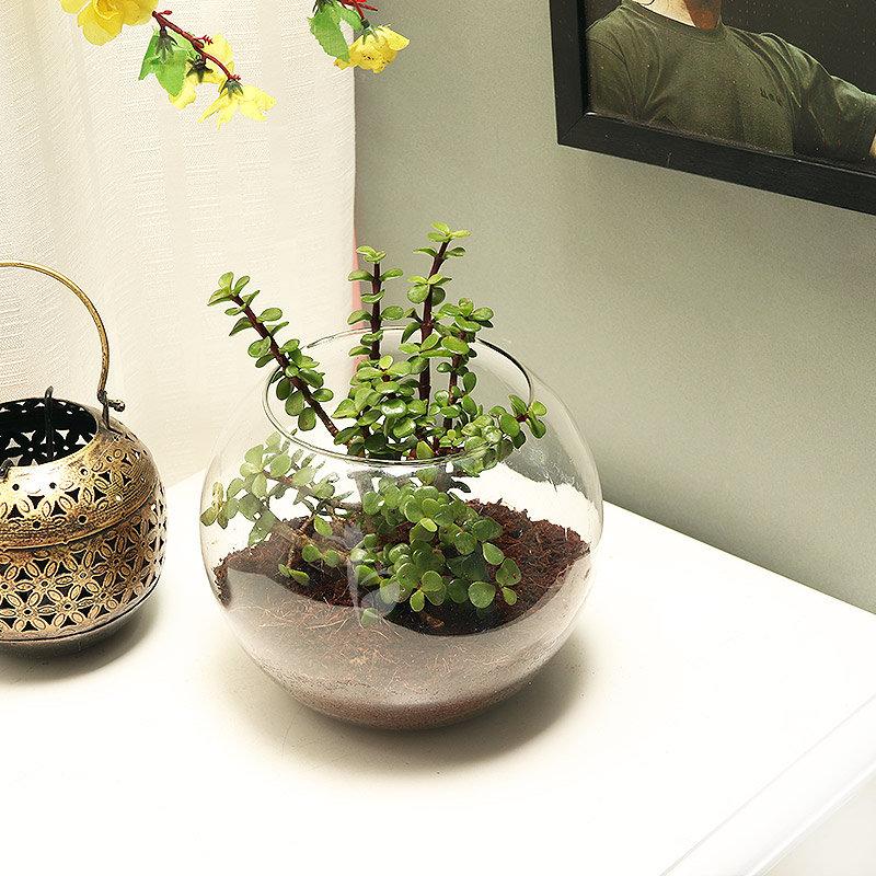 jade-terrarium-9978940pl-C