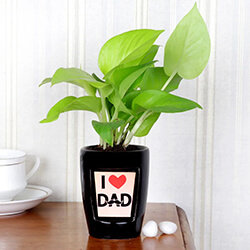 Father's Day Plants