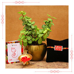 Same Day Rakhi with Plant Delivery