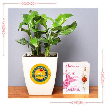 Send Online Rakhi With Plants