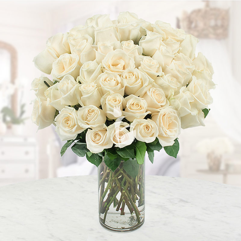 Snow White - 50 White roses bouquet
