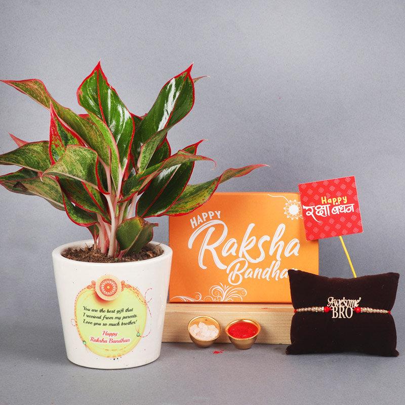 Aglaonema Lipstick Plant N Rakhi - One Designer Rakhi with Roli and Chawal and Happy Rakhsha Bandhan Stick and Air Purifying Plant in Flower Matki Vase