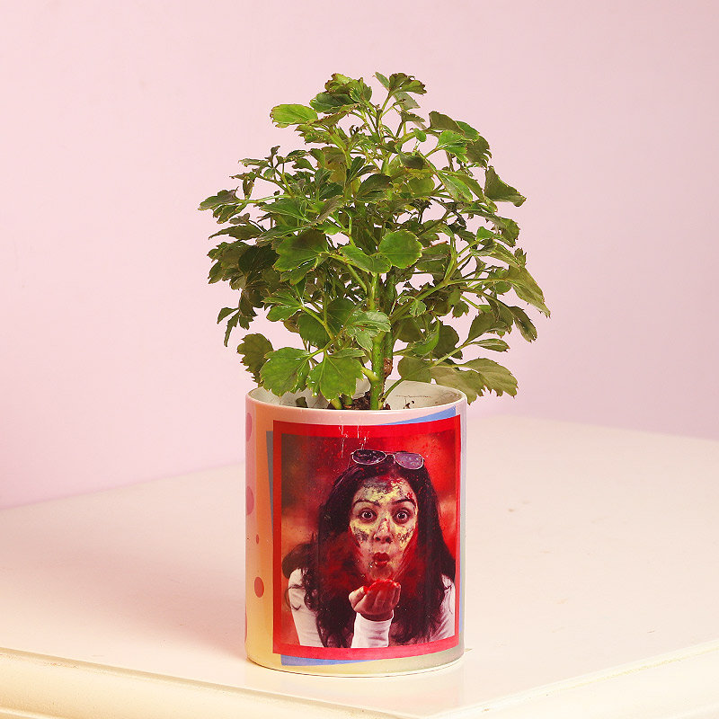 Personalised Green Arelia Holi Plant