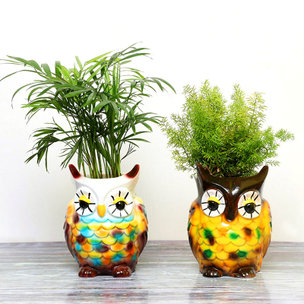 Air Purifying Plant Combo