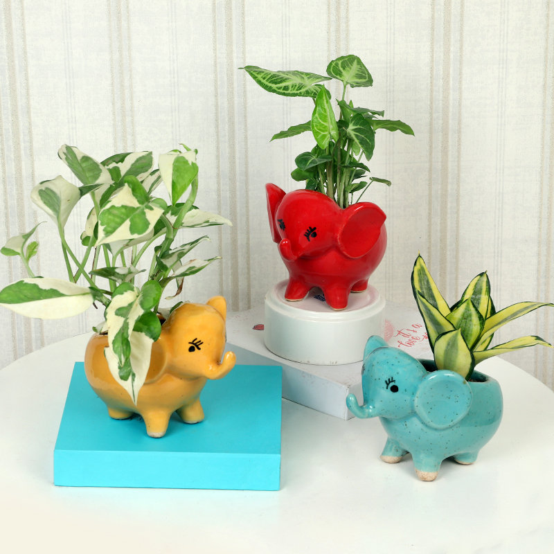 Air Purifying Plant Online Trio