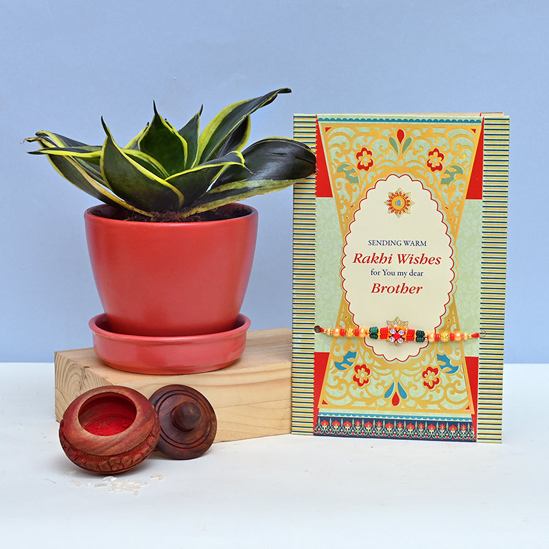 Air Purifying Plant With Rakhi Combo
