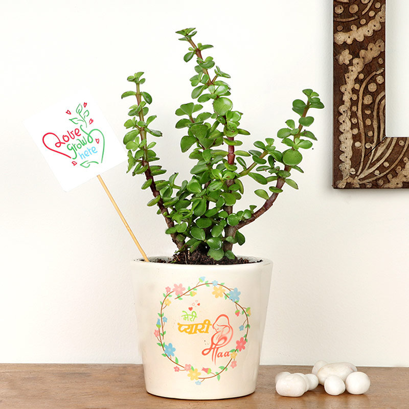 Jade Plant in Personalised Vase for Mom