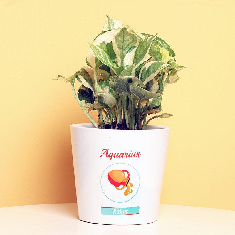 White Pothos Plant in Personalised Vase for Aquarius