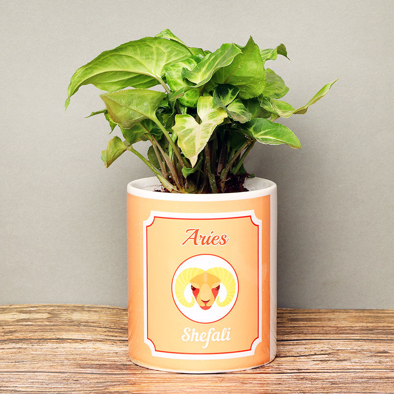 Personalised Syngonium Plant for Aries People