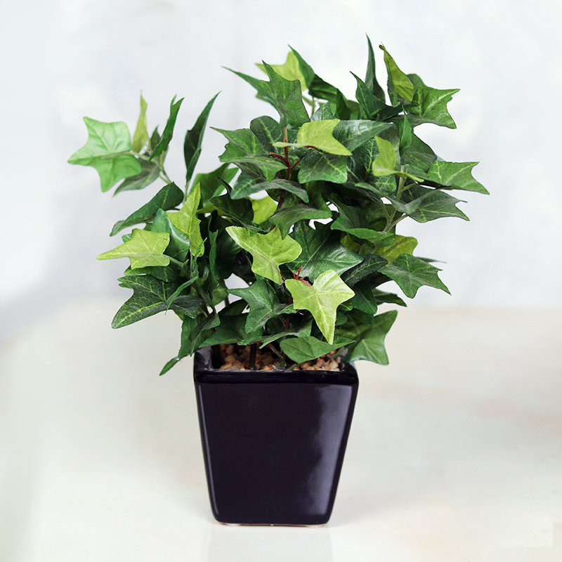 Artificial English Ivy Plant