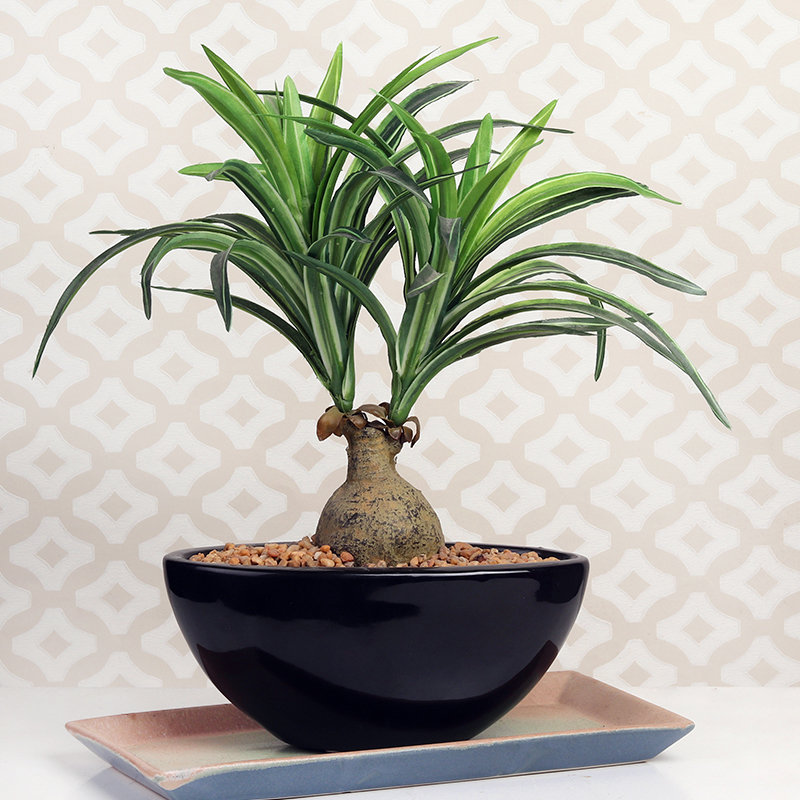 Artificial Ponytail Bonsai Plant