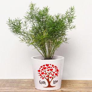 Aspargus Plant In White Vase