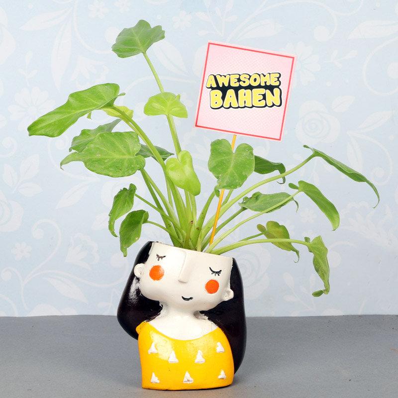 Awesome Behan Golden Xanadu Plant
