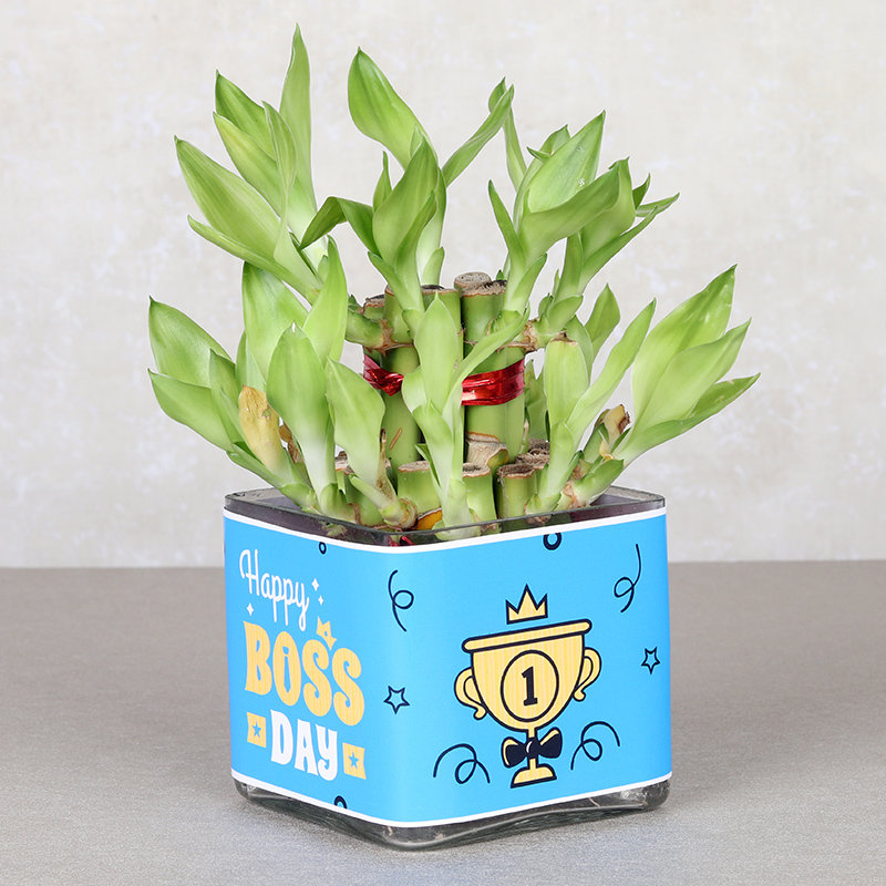 Bamboo Boss Day Special