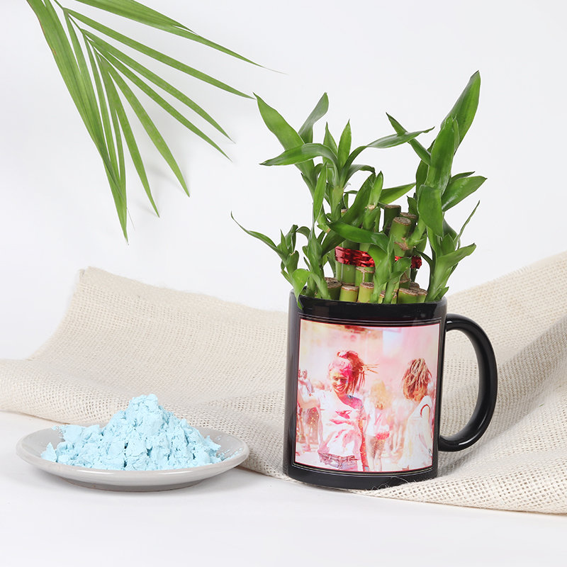 Holi Special Gift - Bamboo Plant With Mug Vase and Color
