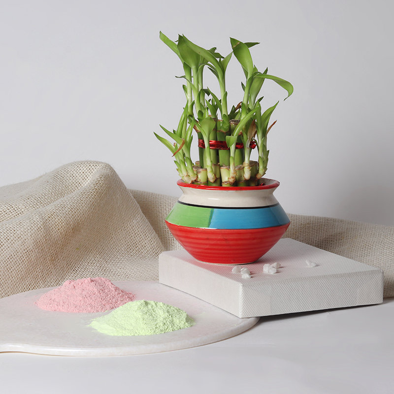 Holi Colors  With Plant - Perfect Gift  for Holi