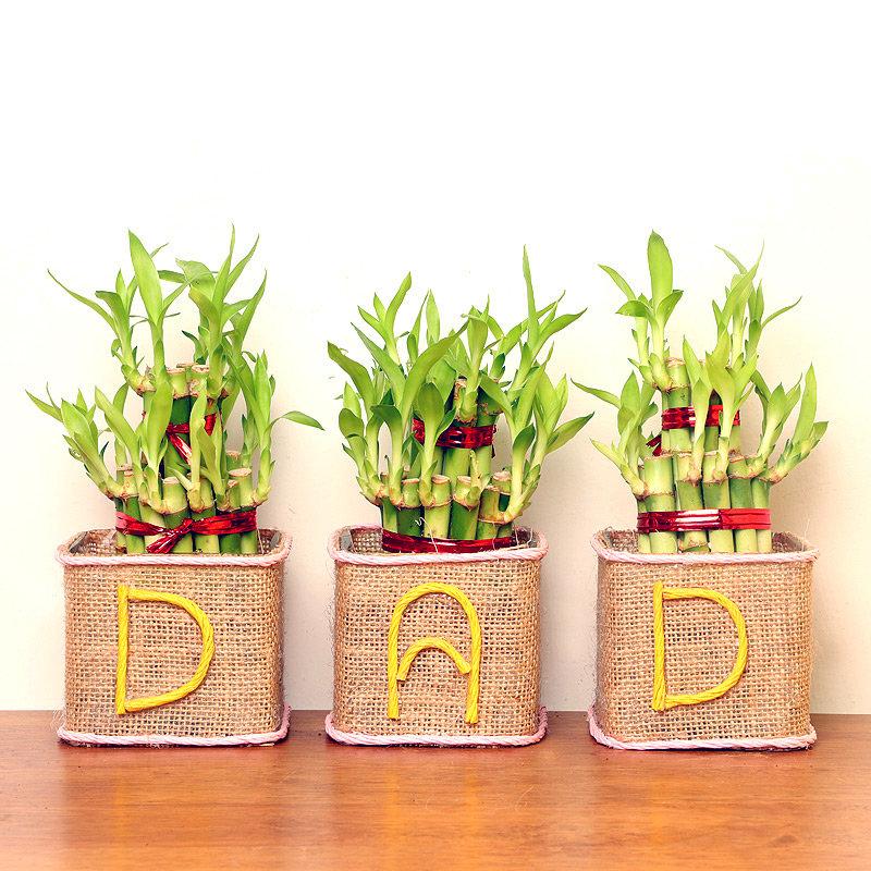 Lucky Bamboo Terrarium Combo for Dad