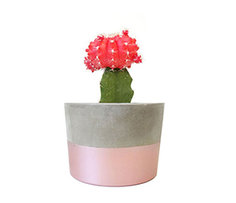 Plants Rs. 699 to 999