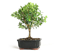 Plants Above Rs. 999
