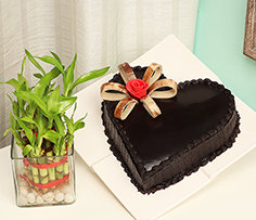 Plant and Cake Online