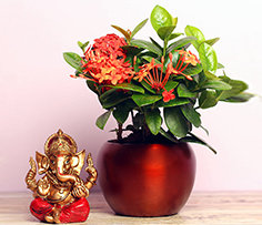 Plants and Idols Online