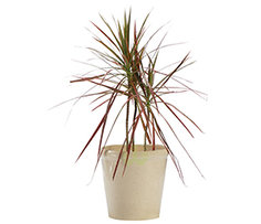 Plants Rs. 399 to 699