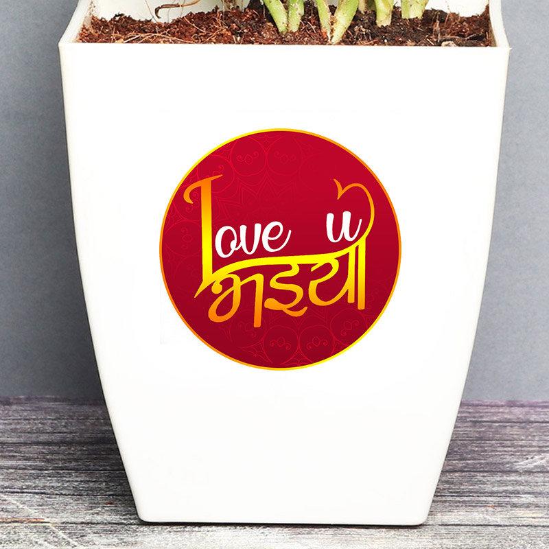 Product View in Rakhi With Plants - Rudraksha Rakhi With Ficus Micro Carpa Bonsai Plant N Chocolate Box