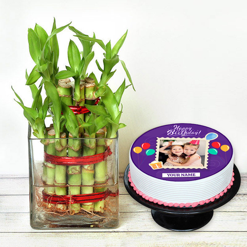 Birthday Cake N Plant Combo