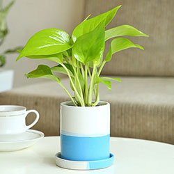 Plants As Birthday Gifts