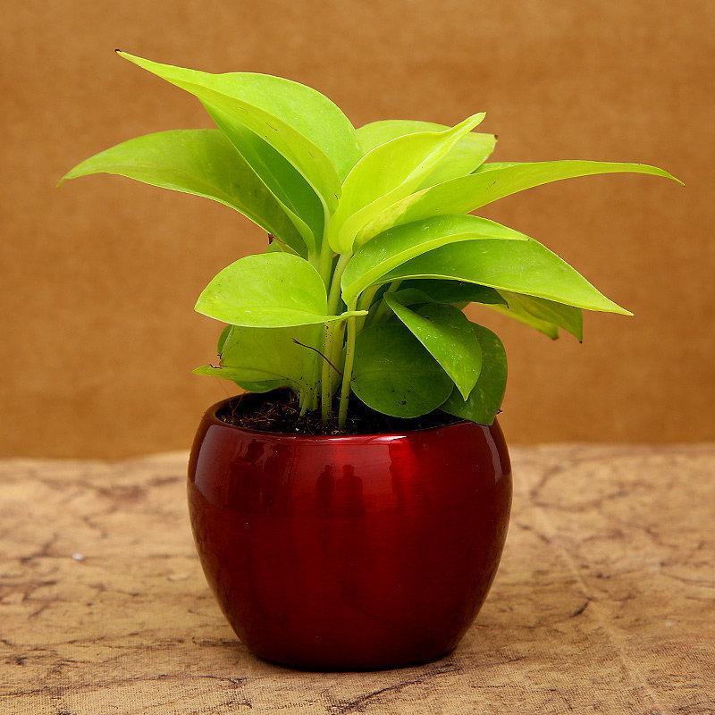 1st Product of Blessings For Veera Rakhi Gift Hamper