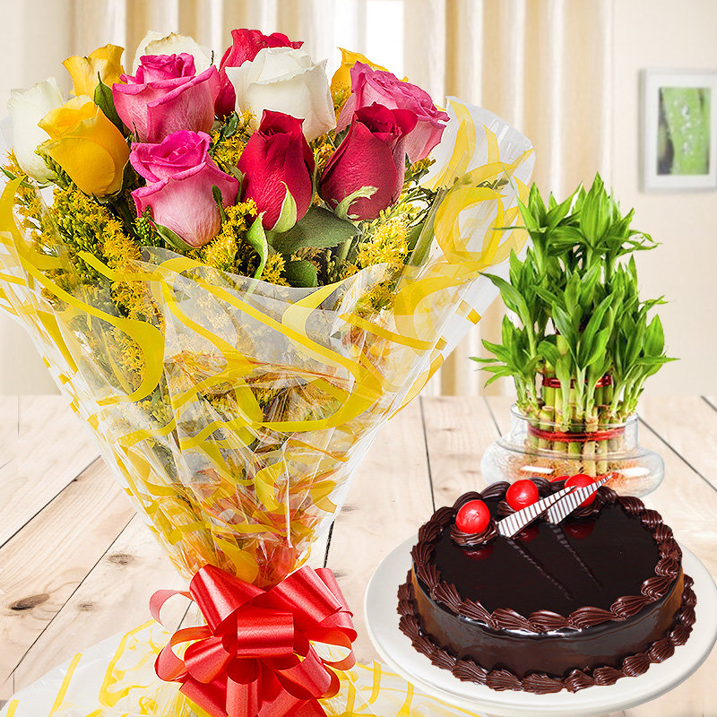Blissful Gift Combo of half kg chocolate truffle cake and 3 layer lucky bamboo