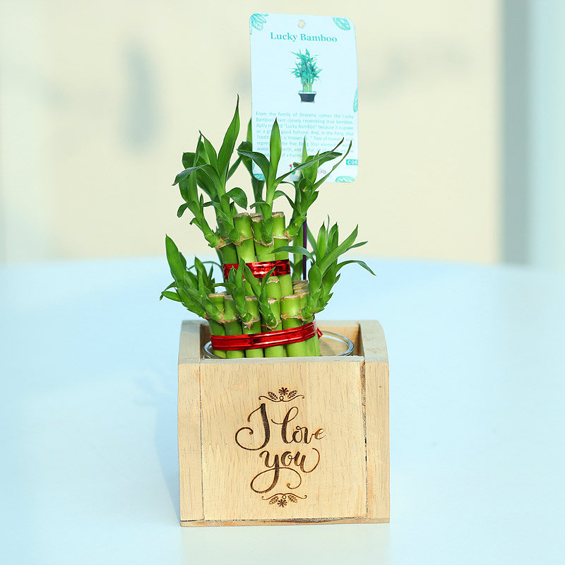 Blissful Bamboo Plant - Good Luck Plant Indoors I Love You Engrave Vase