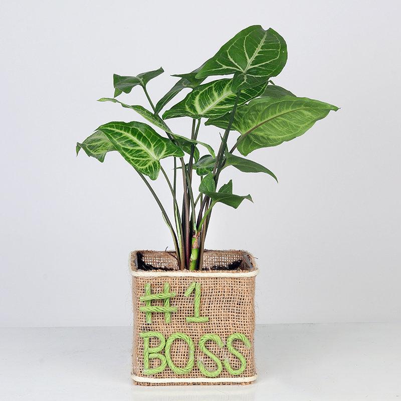 Boss Day Special Fruticosa