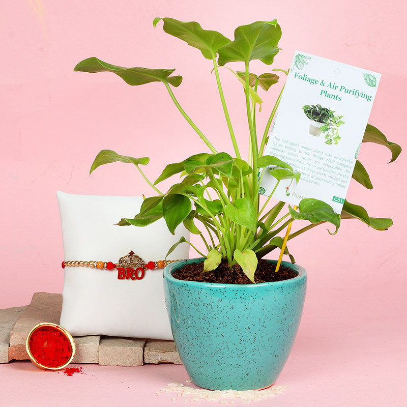 Bro Philodendron Plant - One Designer Rakhi with Foliage Plant in Micro Sea Green Vase