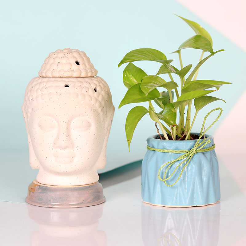 Buddha Diffuser and Money Plant Combo for Diwali