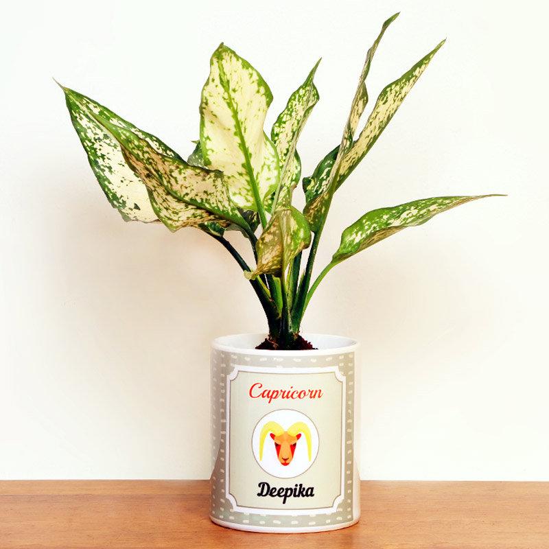 Personalised Aglaonema Plant for Capricorn People