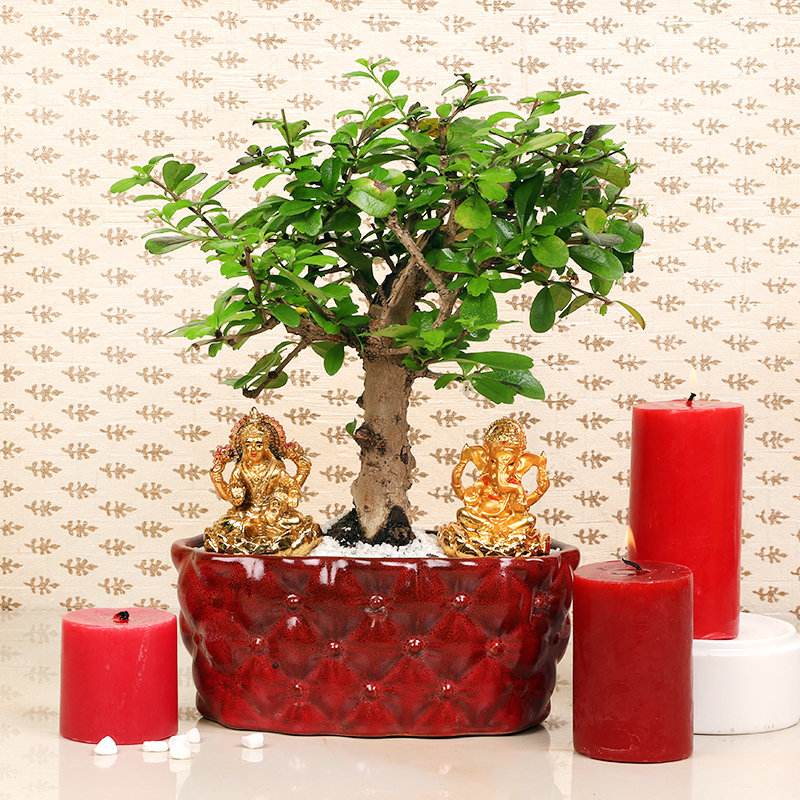 Carmona N Candle Idol Set