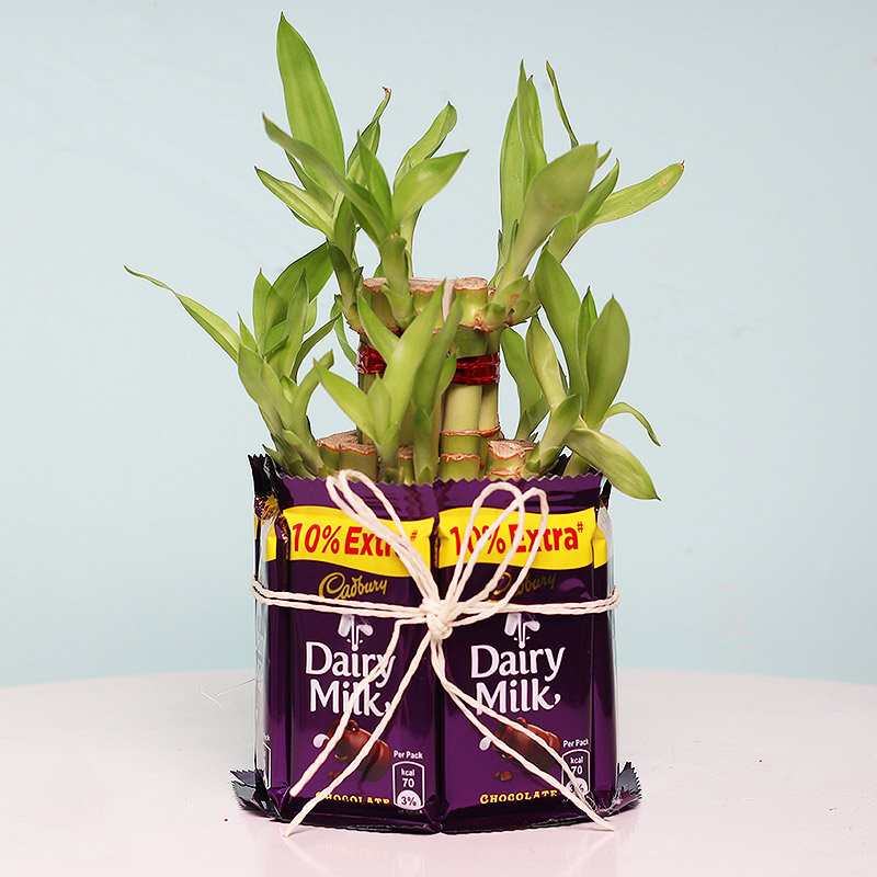 Two Layer Bamboo Surrounded by Seven Dairy Milks